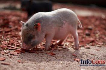 Prima tranșă acordată României pentru măsurile de urgență privind combaterea pestei porcine africane