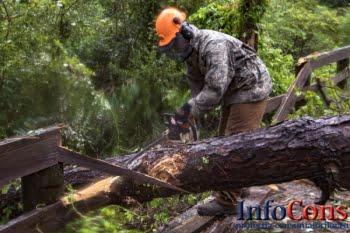 Păduri - Comisia îndeamnă România să pună capăt exploatării forestiere ilegale